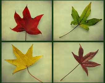 AUTUMN LEAVES PRiNT: SET of 4, fall leaves, nature photography, autumn leaves photography, collage, photo set, collection of leaves