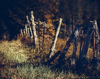 STILL LiFE COUNTRY FENCE: fine art photography, country and western, southern living, kentucky, nature and landscape photography, wall art