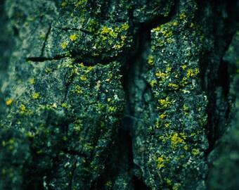 TREE BARK PRINT: bluegreen, teal, nature and landscape photography, tree bark, macro, close-up of tree, tree bark photography, wood, wood p