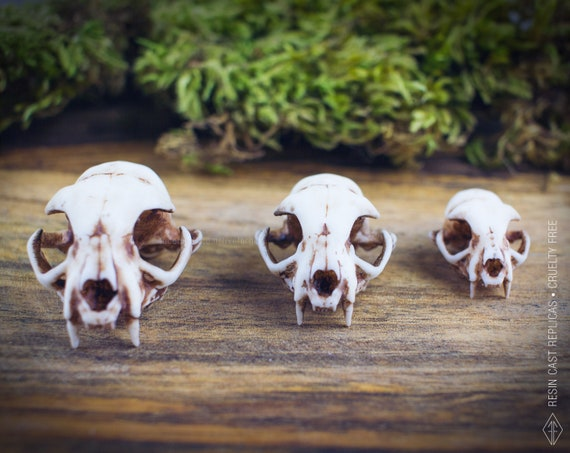 CHAIN MAIL resin cat skull choker