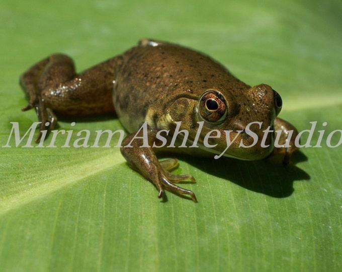 Frog  Photo Digital Image Download