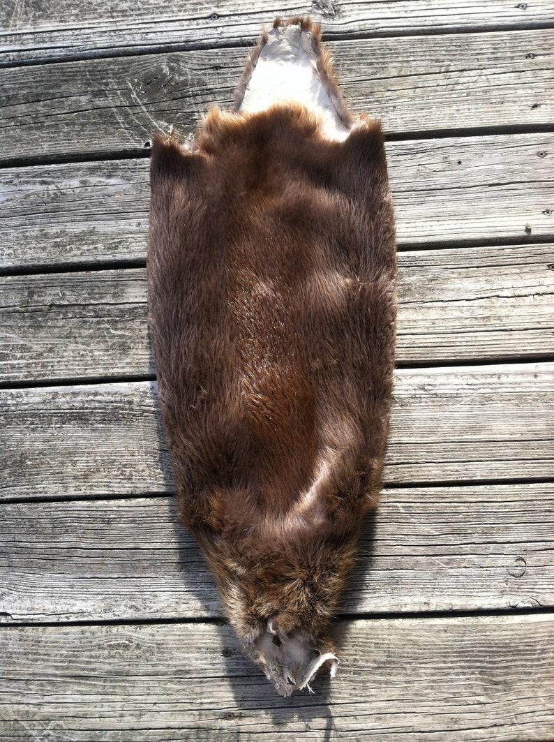 Cased Beaver Pelt CB1901 FREE SHIPPING