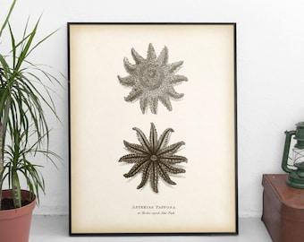 Starfish Art, Starfish Print, Star Fish Decor, Ocean Decor, Ocean Animals, Sea Animal, Vintage nautical print, Instant download, 8x10, 11x14