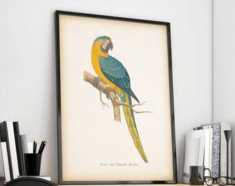 Vintage parrot print, Instant download bird print, Bird art, Antique art prints, Parrot art, Printable art, Home print, 8x10, 11x14 print