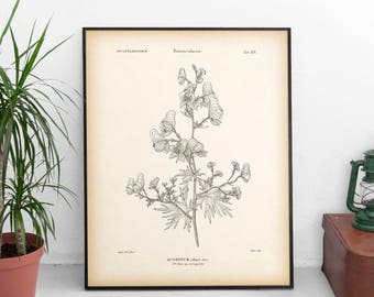 Wolfsbane, Antique botanical print, Aconite print, Instant download vintage print, Botanical art, Art print download, 8x10 print 11x14 print