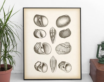 Shell decor, Shell wall art, Antique shell print, Nautical prints, Illustration vintage, Instant download, Printable art, 8x10, 11x14 print