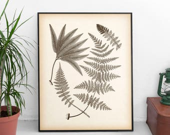 Antique fern print, Art print vintage, Printable print, Instant download fern illustration, Botanical art print, Vintage home wall art, JPG