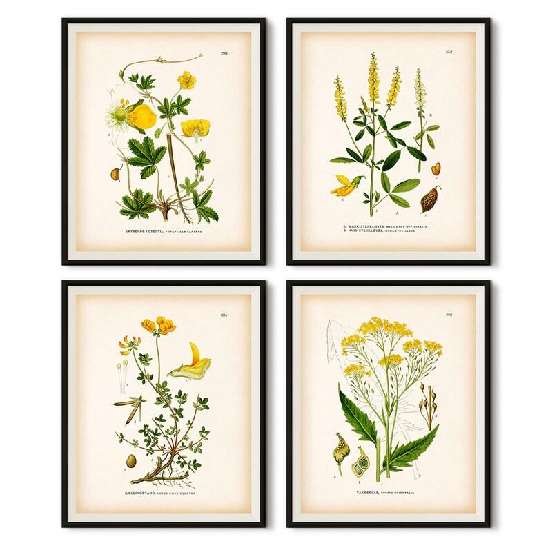 Yellow botanical wall art, Vintage botanical print, Instant download  printable art, Set of 4 botanical prints, Antique botanical print set
