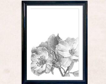 Roses Pencil Drawing Art Print. Detailed Monochrome Botanical Illustration. Nursery, Bedroom, Living Room.