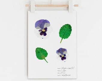 Purple & White Pansy flower wall art, Botanical home decor idea, Botanical Pansy poster, Purple pressed flower art
