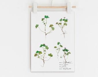 Tiny little flower print, Geranium wild flowers botanical print, Antique botanical style, Vintage botanical home decor, Pressed flower art