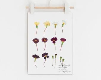 English primrose print, Primrose flower illustration, Pressed flower art, Botanical poster, Vintage botanical art, Antique botanical style