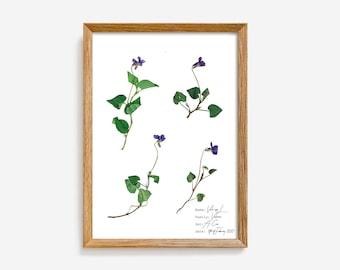 Viola botanical illustration, Violet flower poster, Vintage botanical style, Violet botanical print, Nature inspired art, Pressed flower art
