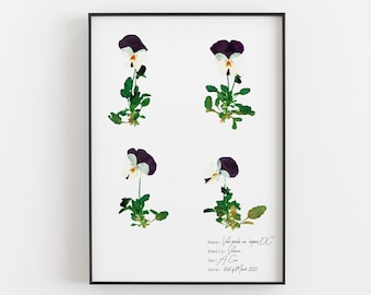 Little pansy flowers wall decor, Purple pansy floral print, Botanical print collection, Vintage style botanical art