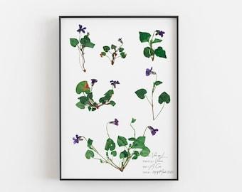Violet flower poster, Botany artwork, Vintage home decor, Violet botanical print, Pressed flower art, Purple floral wall art