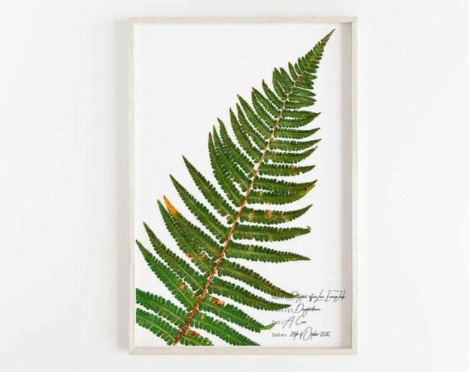 Fern prints