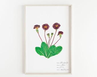Pink pressed flower art, Pink primrose poster, English primrose illustration, Pink floral wall art, Antique style botanical print