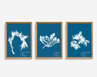 Algae cyanotype botanical print set of 3, Seaweed cyanotype poster set, Algae cyanotype illustrations, Vintage botanical style print set