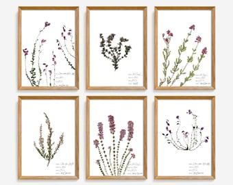 Heather botanical illustration, Heather flower print set, Pink floral wall art, Pressed flowers artwork, Botanical poster set