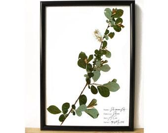 Grey willow wall decor - Tree home decor - Botanical art print - Plant decorative print