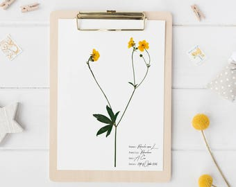 Ranunculus botanical print - Yellow flower print - Botanical art - Vintage home decor - Nature print