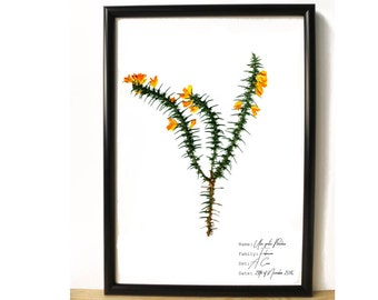 Yellow flower print - Botanical wall art - Herbarium print - Botany art - Nature lover gift