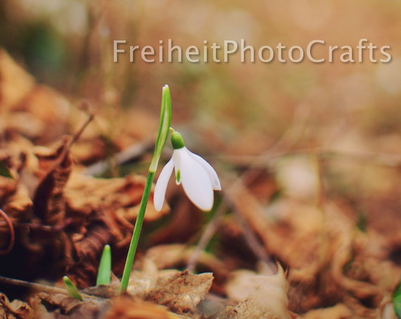 Flowers,nature-Winter is over photographic prints.