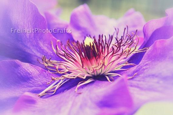 Flowers,nature-Elegance photographic prints.