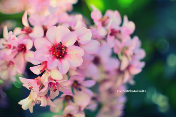 "Photographic prints ""Pretty in Pink"""