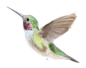 Hummingbird-Digital Print