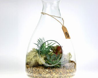 Beautiful Large Terrarium Kit with Living Succulent Plants | Unique Gift for the Home, Indoor Plants, Succulent Planter, Indoor Garden