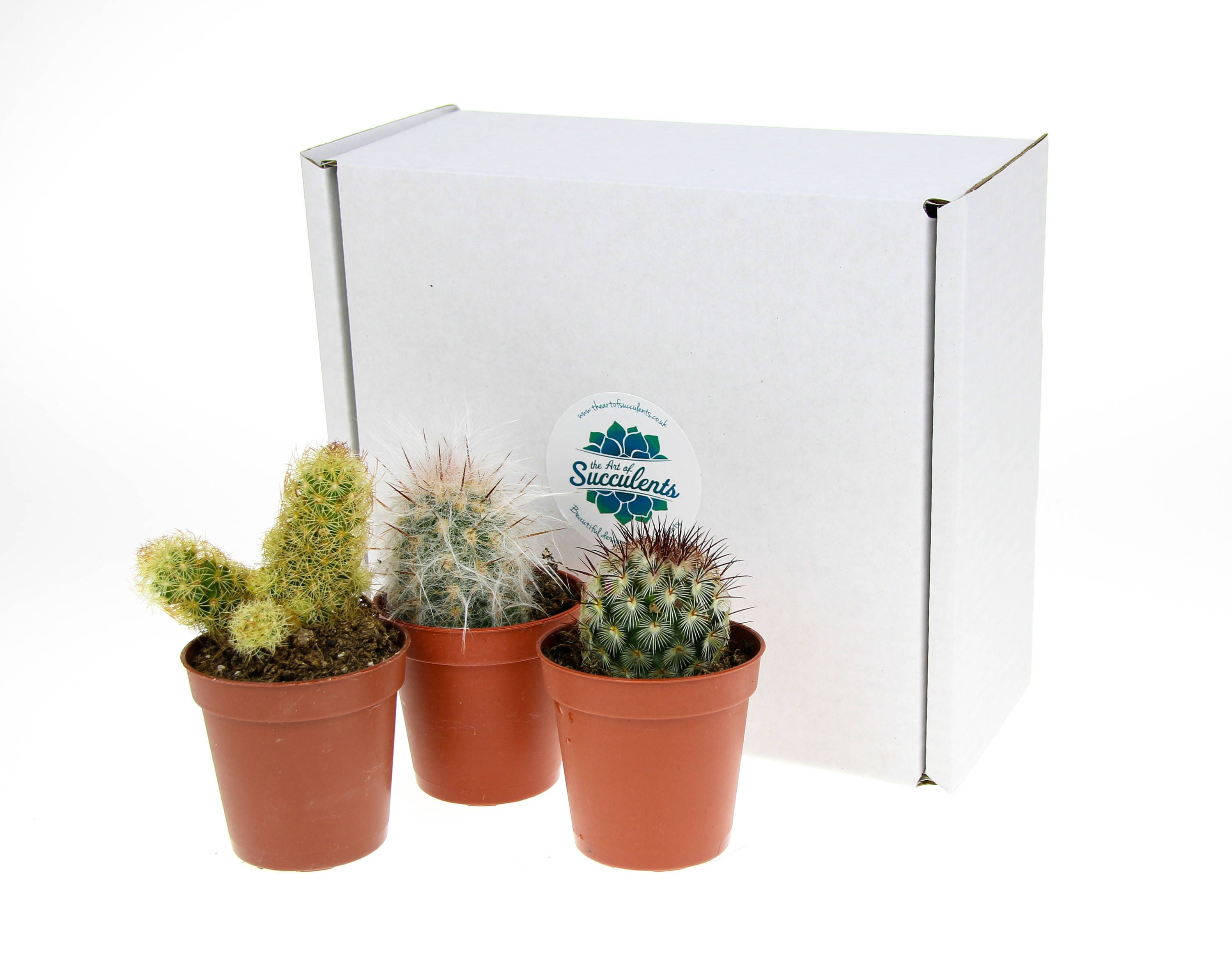 3 X Small Cactus Plant Selection Cactus Plants For Etsy