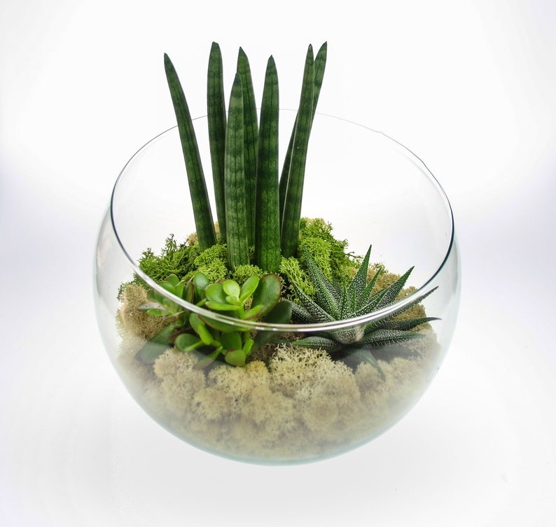 Shades Of Moss Terrarium With Angled Glass Bowl Natural Etsy