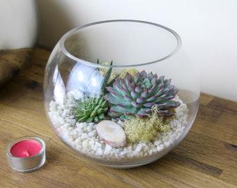 Medium Globe Glass Terrarium Kit Perfect Gift | Beautiful Sized Terrarium featuring 3 living Succulent Plants & Decorative Stone