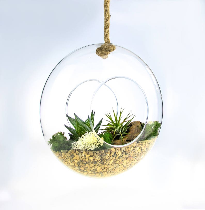 Large Glass Rope Hanging Terrarium With Succulent And Etsy