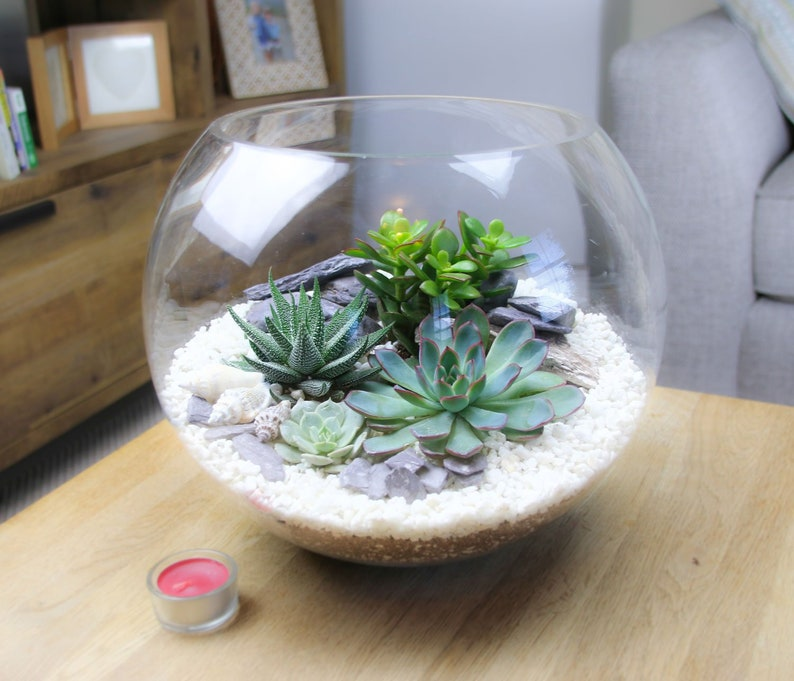Extra Large Glass Globe Terrarium Kit Huge 30cm Diameter Etsy