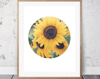 Printable Photography, Sunflowers, Digital Art, Circle Photo Art, Yellow, Summertime, Nature Art