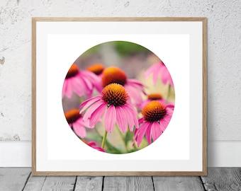 Printable Flower Photography, Circle Art, Coneflower, Pink Flowers, Digital Download