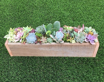 Succulent Gift Box Succulent Centerpiece For Table Office Gift Sympathy  Gift For Mom Birthday Gift Succulent Arrangement Congratulations Gif