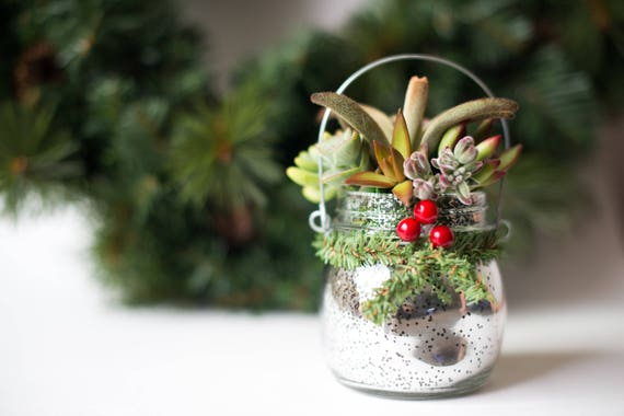 Christmas Succulent Gift.Christmas Succulent Gift Party Favor Teacher Gift Office Gift Mason Jar Gift For Coworker Host Gift Thank You Gift Succulent Gift Box