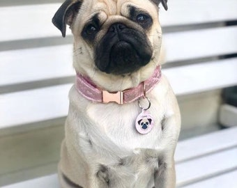 Luxury Baby Pink Velvet Dog Collar with choice of buckle type