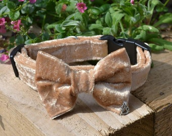 Luxury Gold Velvet Dog Collar with choice of buckle type