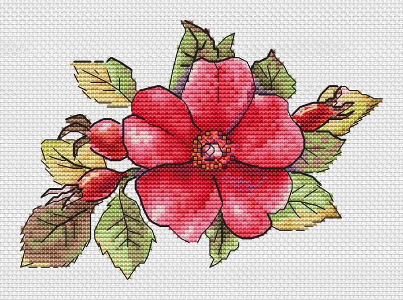 The Easiest Geranium Flower Meaning In Telugu {Tiburon Es Rojos}