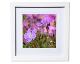 Geranium Flower Photo Print or Canvas