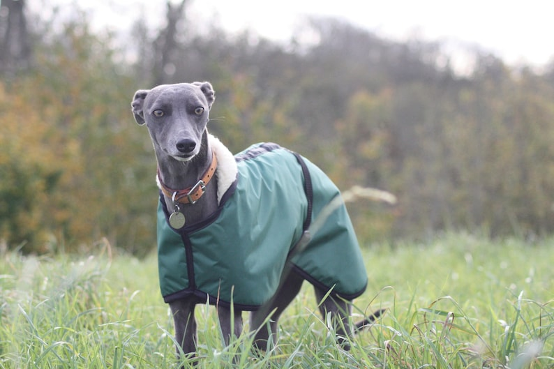 Green Fleece Lined Waterproof Dog Coat with Adjustable Clip Strap Whippet Greyhound Lurcher Italian Greyhound Sighthound