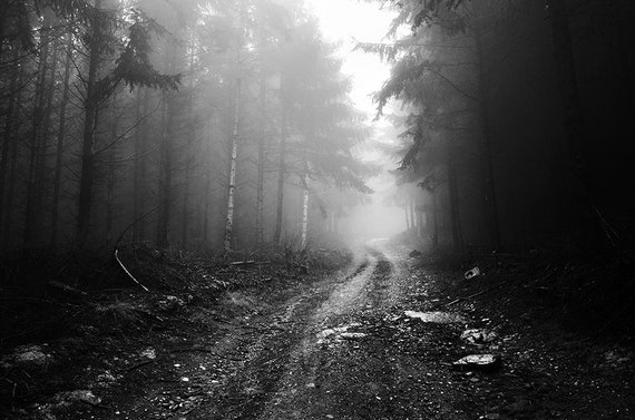 TREES LIGHT FOG BLACK WHITE PHOTO Poster Picture Canvas art Prints
