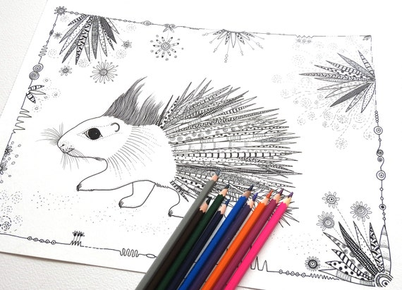 Porcupine Coloring Page Colouring Pages Adult Colouring Etsy