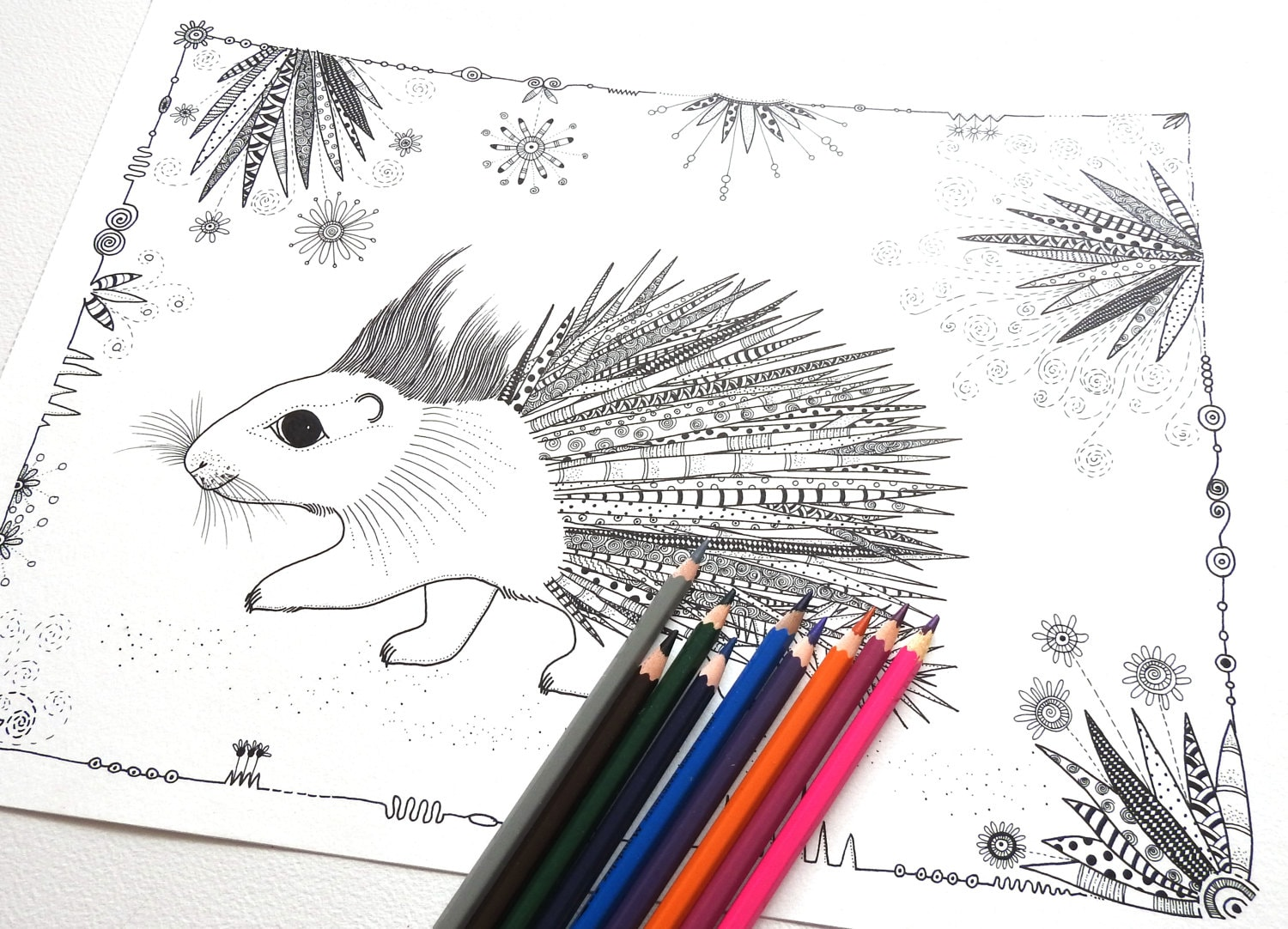 Porcupine Coloring Page Colouring Pages Adult Colouring | Etsy