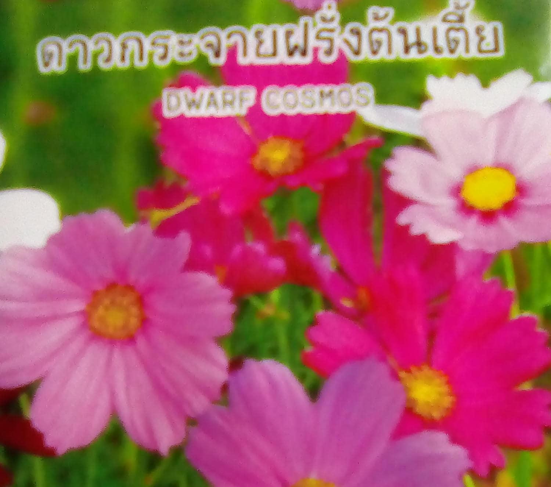 Dwarf cosmos 07 gram decorative flower plant seeds etsy zoom mightylinksfo