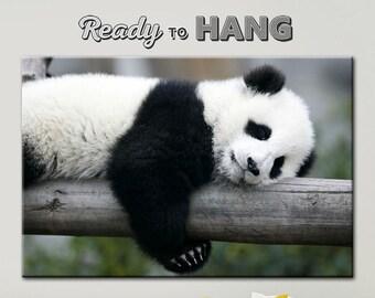 Panda canvas, Panda art, Panda picture, Fluffy panda art, Panda on the tree, Panda is resting, Panda asleep, Bear panda, Bear panda canvas